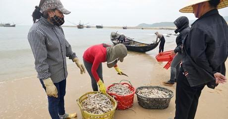 Sự cố môi trường Formosa gây ảnh hưởng nghiêm trọng đến 4 tỉnh miền Trung