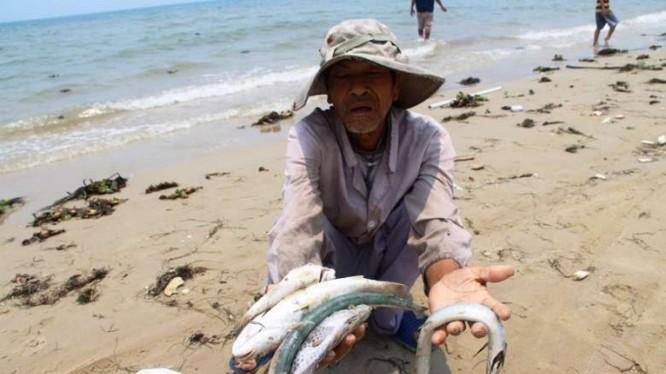 Ngư dân bị thiệt hại nặng nề sau sự cố cá chết 4 tỉnh miền Trung.