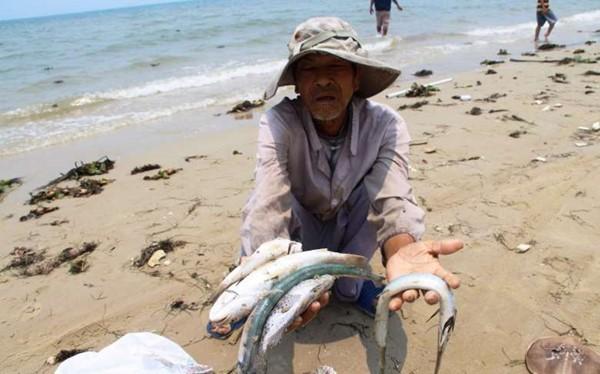 Sự kiện ô nhiễm môi trường 4 tỉnh miền Trung gây thiệt hại nặng nề cho bà con ngư dân.