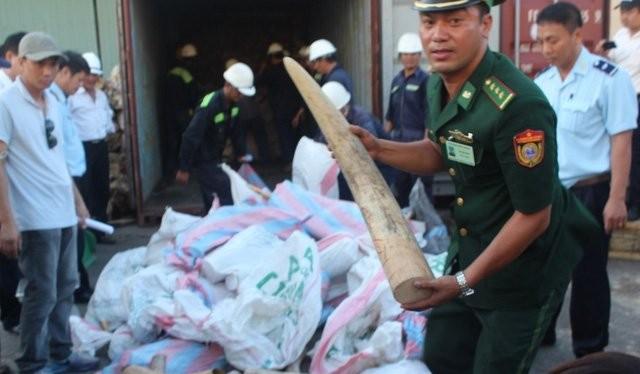 Buổi tiêu hủy sẽ diễn ra tại huyện Sóc Sơn, TP Hà Nội.