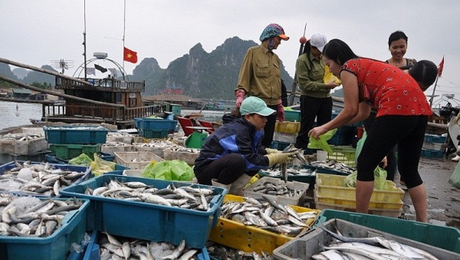 Bộ Y tế phải công bố kết quả xét nghiệm hải sản miền Trung vào cuối tháng 12/2016.