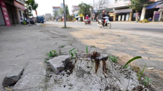 Chiến dịch dọn vỉa hè, nhiều cây tại Hà Nội đã bị chặt.