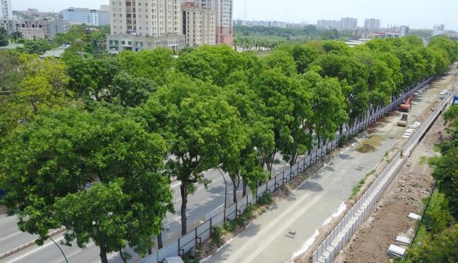 Việc chặt hạ hơn 1.000 cây xanh mới chỉ là đề xuất của Ban Quản lý đầu tư xây dựng các công trình giao thông Hà Nội.