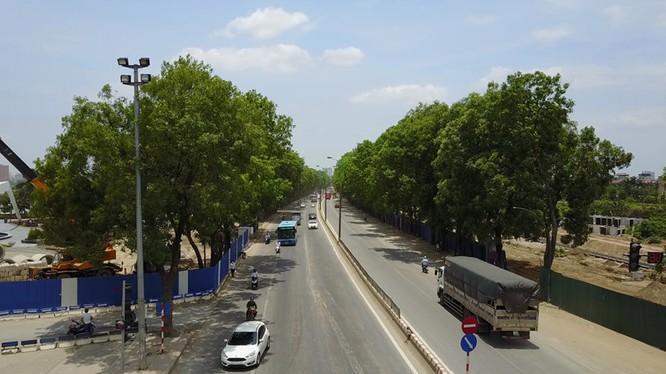 Hà Nội sẽ trồng gấp nhiều lần số cây xanh bị giải tỏa trên đường Phạm Văn Đồng.