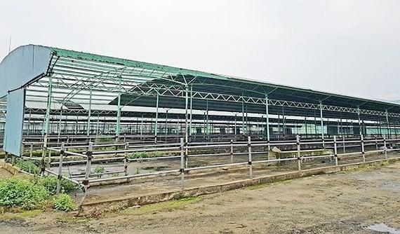 Một góc trại chăn nuôi bò của dự án chăn nuôi bò giống và bò thịt tại Hà Tĩnh do Công ty CP chăn nuôi Bình Hà thực hiện ở địa bàn huyện Kỳ Anh, tỉnh Hà Tĩnh bị bỏ hoang/ Ảnh: sggp.org.vn