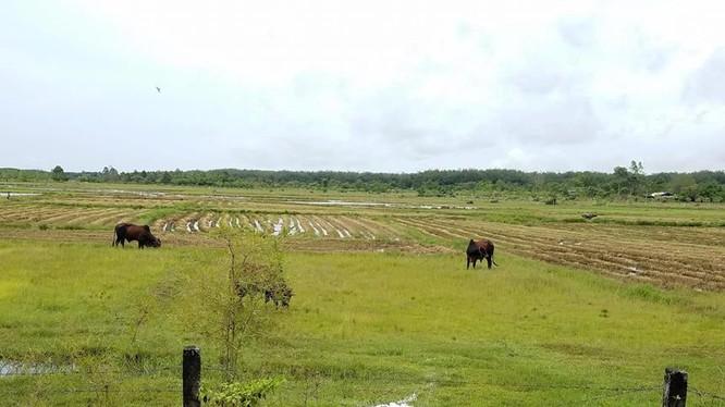 14 năm sau ngày thu hồi đất, Công viên Sài Gòn Safari vẫn chưa thể khởi công/ Ảnh: zing.vn