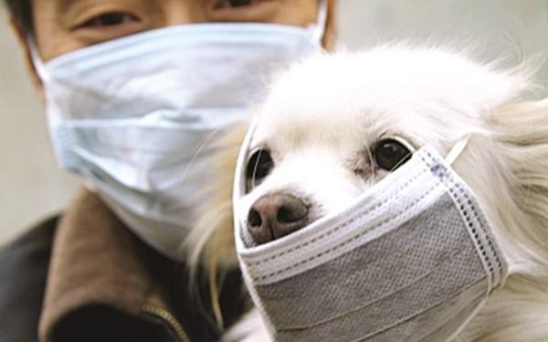Liệu vật nuôi có bị nhiễm virus Corona? (Ảnh: We25)
