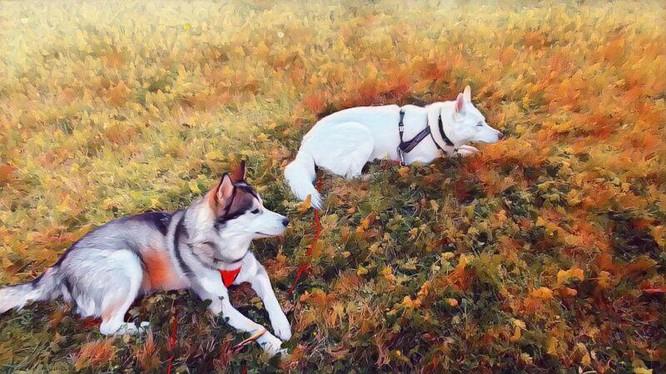 Chó và người đã là bạn của nhau ít nhất 23.000 năm (Ảnh: ArsTechnica)