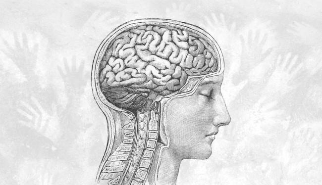 Bộ não con người đang ngày một nhỏ đi (Ảnh: Discover Magazine)