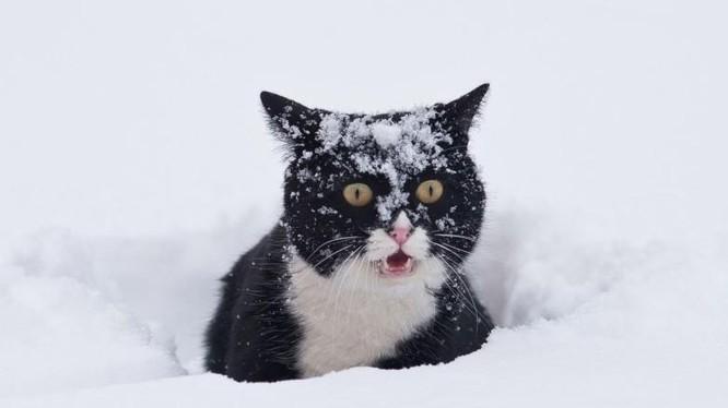 Các nhà khoa học mới đây đã tìm ra cách hạn chế việc những chú mèo săn bắt và mang xác động vật về nhà (Ảnh: BGR)