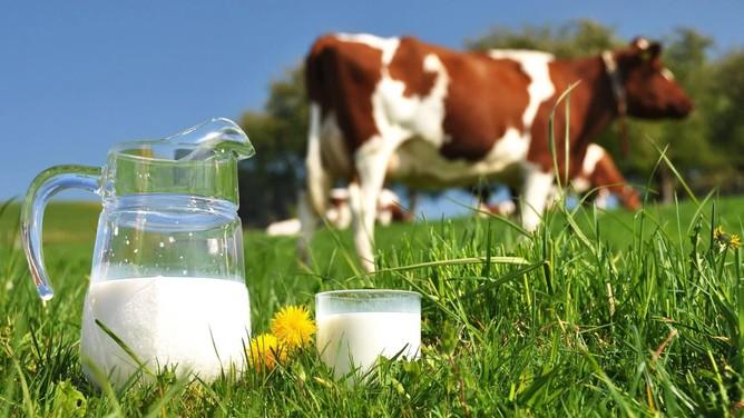 Ngành sữa quý II: Biên lợi nhuận gộp Sữa Quốc Tế vượt Vinamilk