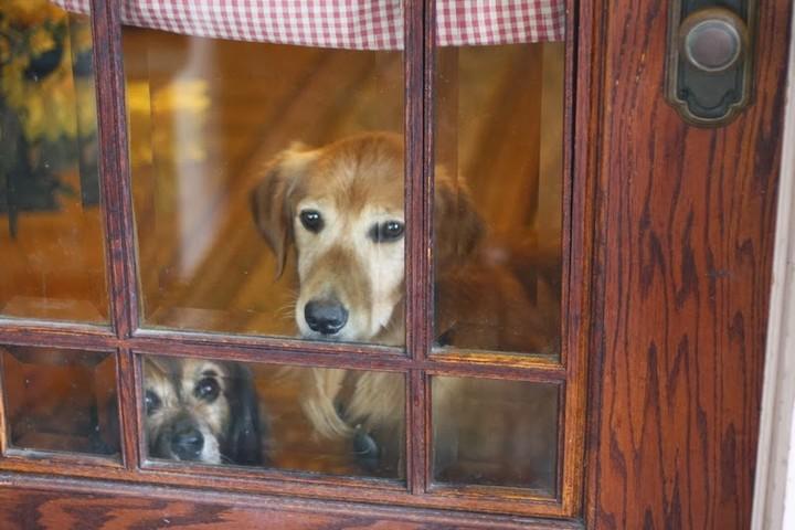 12 điều chú chó muốn nhắn gửi tới bạn qua hành động