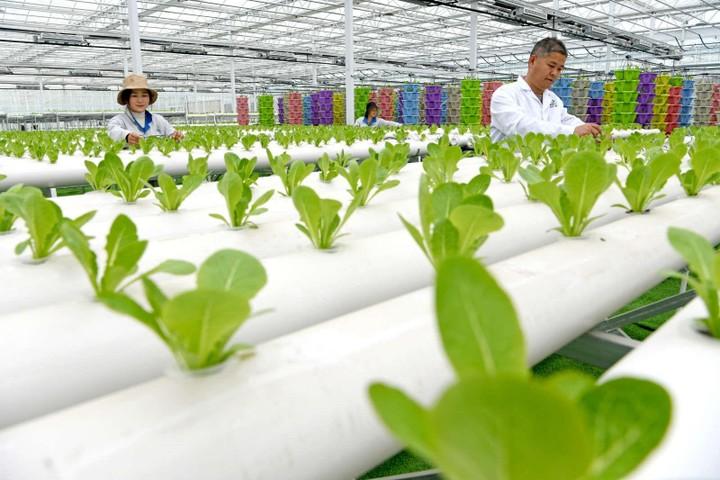 Trung Quốc tạo sức sống mới cho vùng nông thôn nhờ chuyển đổi số