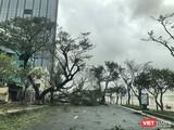 Bão gây gãy đổ cây cối địa bàn TP Đà Nẵng