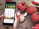Người dùng có thể mua nông sản trên ứng dụng ví điện tử MoMo.