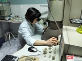 Cán bộ nghiên cứu làm việc tại Viện Vệ sinh dịch tễ Trung ương. Ảnh: Minh Thúy