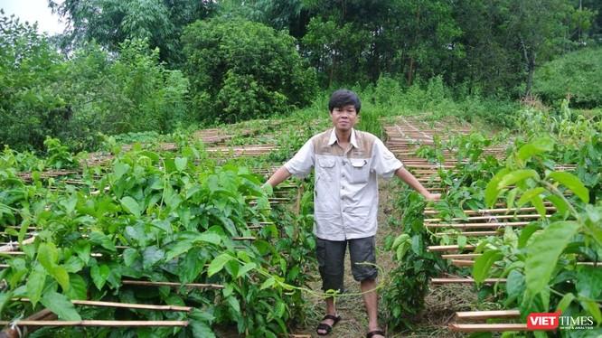 Nhà khoa học Trần Văn Ơn dồn tâm huyết nghiên cứu cây thìa canh trong nhiều năm liền