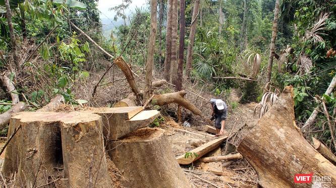 Cơ quan chức năng Quảng Nam vừa phát hiện thêm vụ phá rừng quy mô lớn ở rừng phòng hộ sông Kôn thuộc địa phận huyện Đông Giang