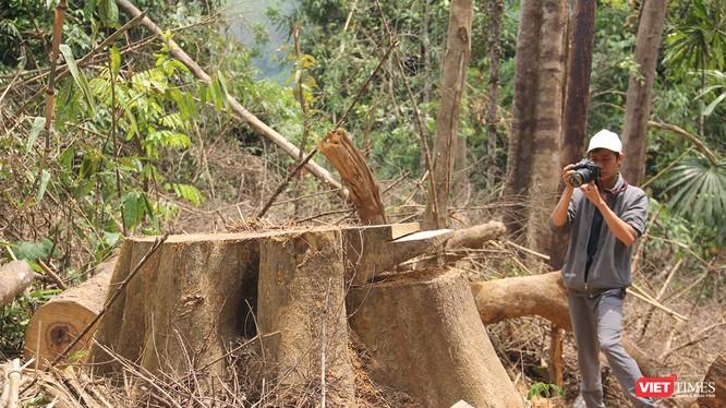 Ngoài vụ phá rừng phòng hộ Sông Kôn ở huyện Đông Giang (Quảng Nam) đang được làm rõ, Quảng Nam lại nổi lên thêm 2 vụ phá rừng quy mô lớn ở huyện Nam Giang với số lượng gỗ quý bị triệt hạ lên đến trên 235m3.
