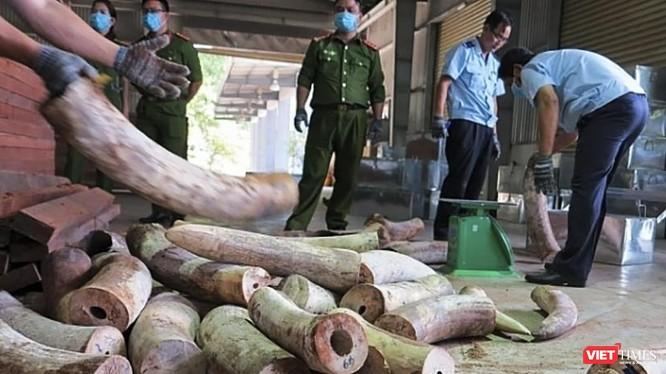 Cơ quan chức năng đâng kiểm kê số lượng lô ngà voi nhập trái phép vào cảng Đà Nẵng