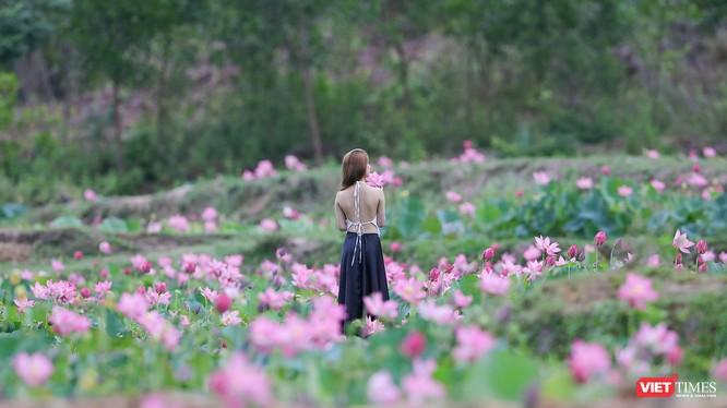 Giới trẻ ghi lại những khoảnh khắc bên cánh đồng sen lớn Trà Lý (Quảng Nam)