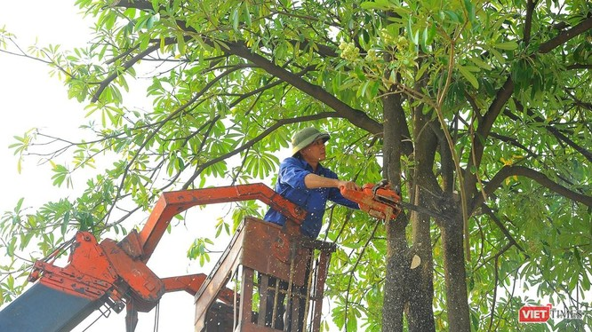 Cắt tỉa cây xanh bằng xe nâng tại Hà Nội