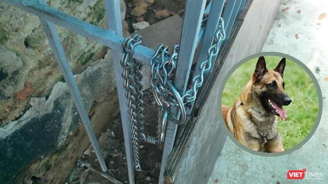 Con chó thuộc giống Malinois thường bị xích ở chuồng sắt sau nhà.