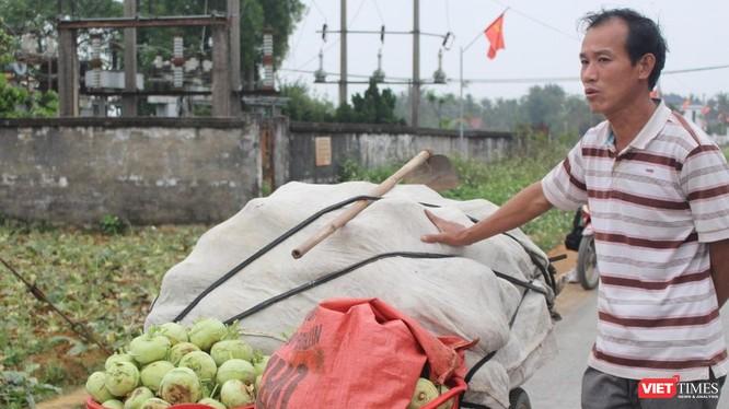 Nhiều hộ trồng cây nông sản trên địa bàn xã Diễn Phong, huyện Diễn Châu, Nghệ An nhổ rau vứt đi vì giá quá rẻ.