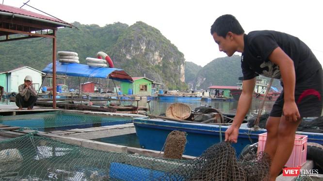 """Việt Nam còn nhiều việc cần làm để bảo đảm an toàn thực phẩm bằng kiểm soát """"đầu vào"""" nguyên liệu thức ăn chăn nuôi. Ảnh: Quốc Dũng"""