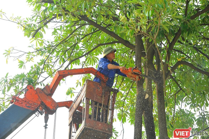 Cây xanh đô thị tại Việt Nam đang thiếu nguồn nhân lực trình độ cao