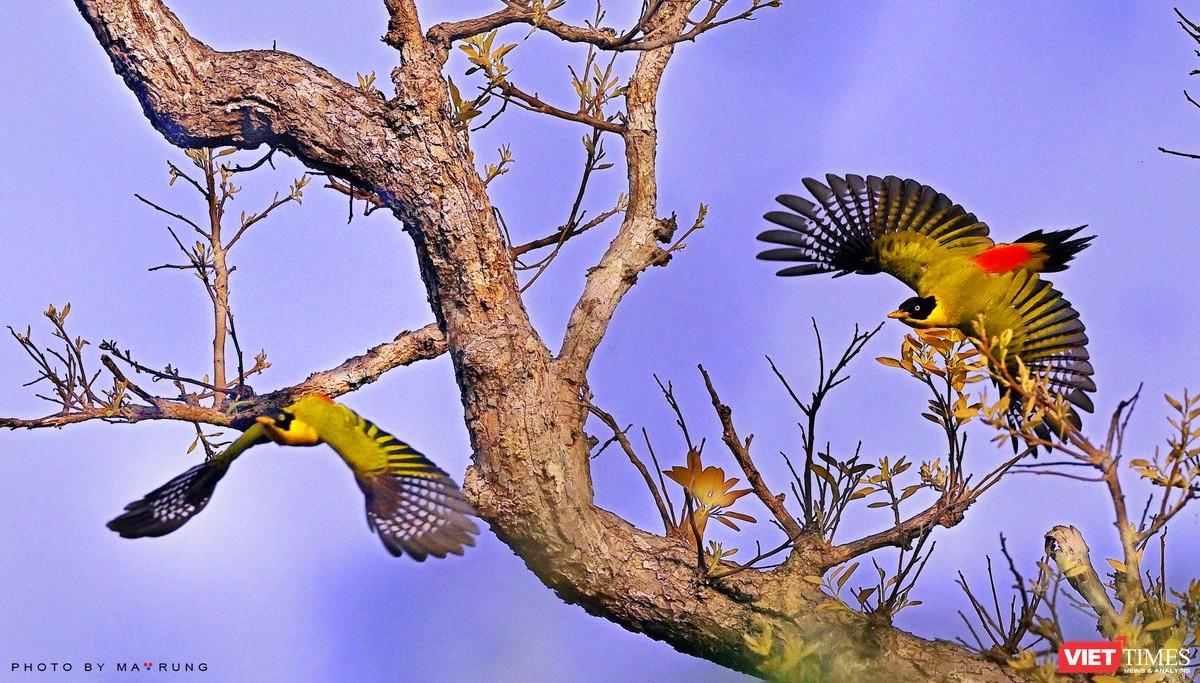 Săn ảnh chim với Ma Rừng và Phù Thủy ảnh 10