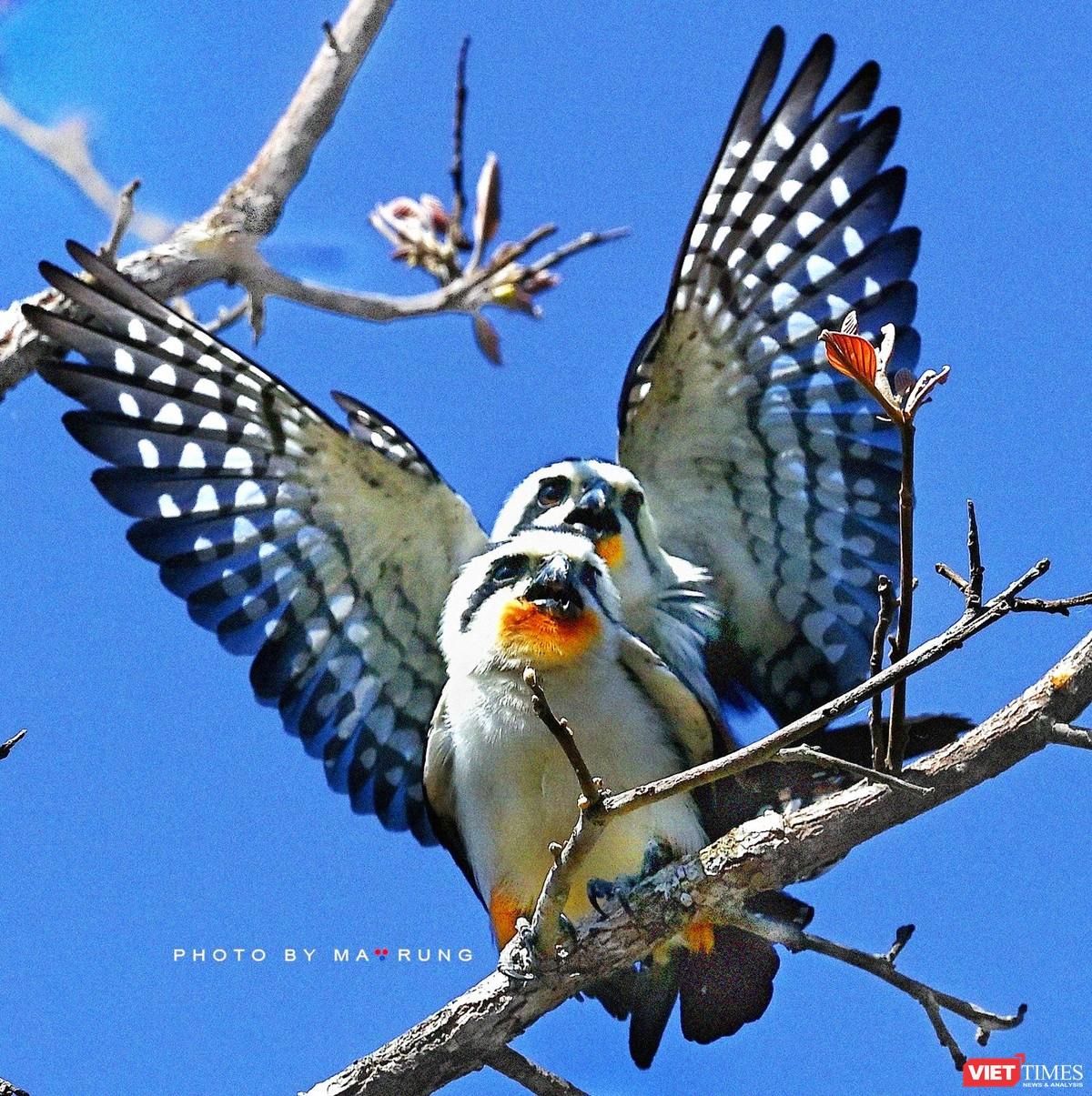 Săn ảnh chim với Ma Rừng và Phù Thủy ảnh 9