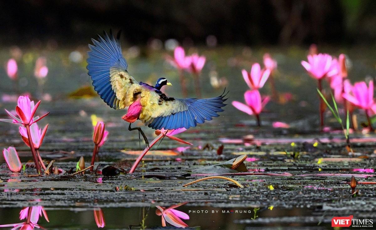 Săn ảnh chim với Ma Rừng và Phù Thủy ảnh 20