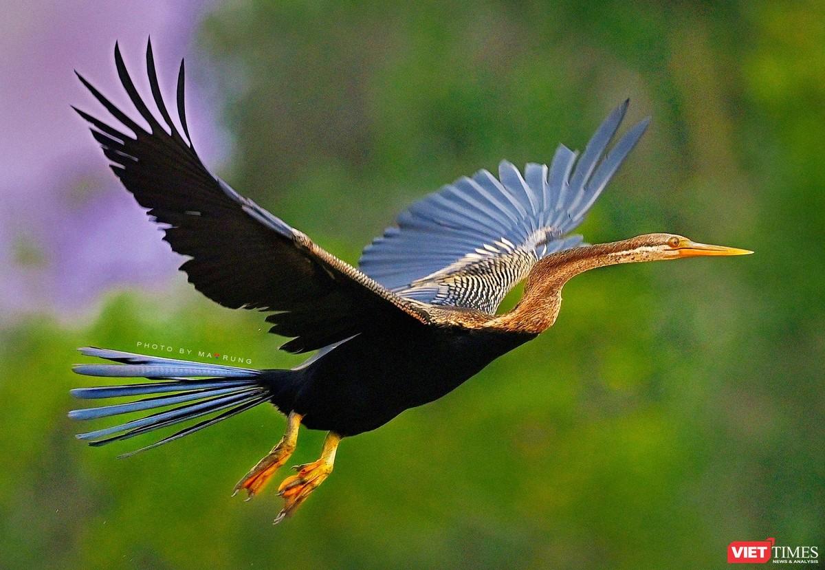 Săn ảnh chim với Ma Rừng và Phù Thủy ảnh 15