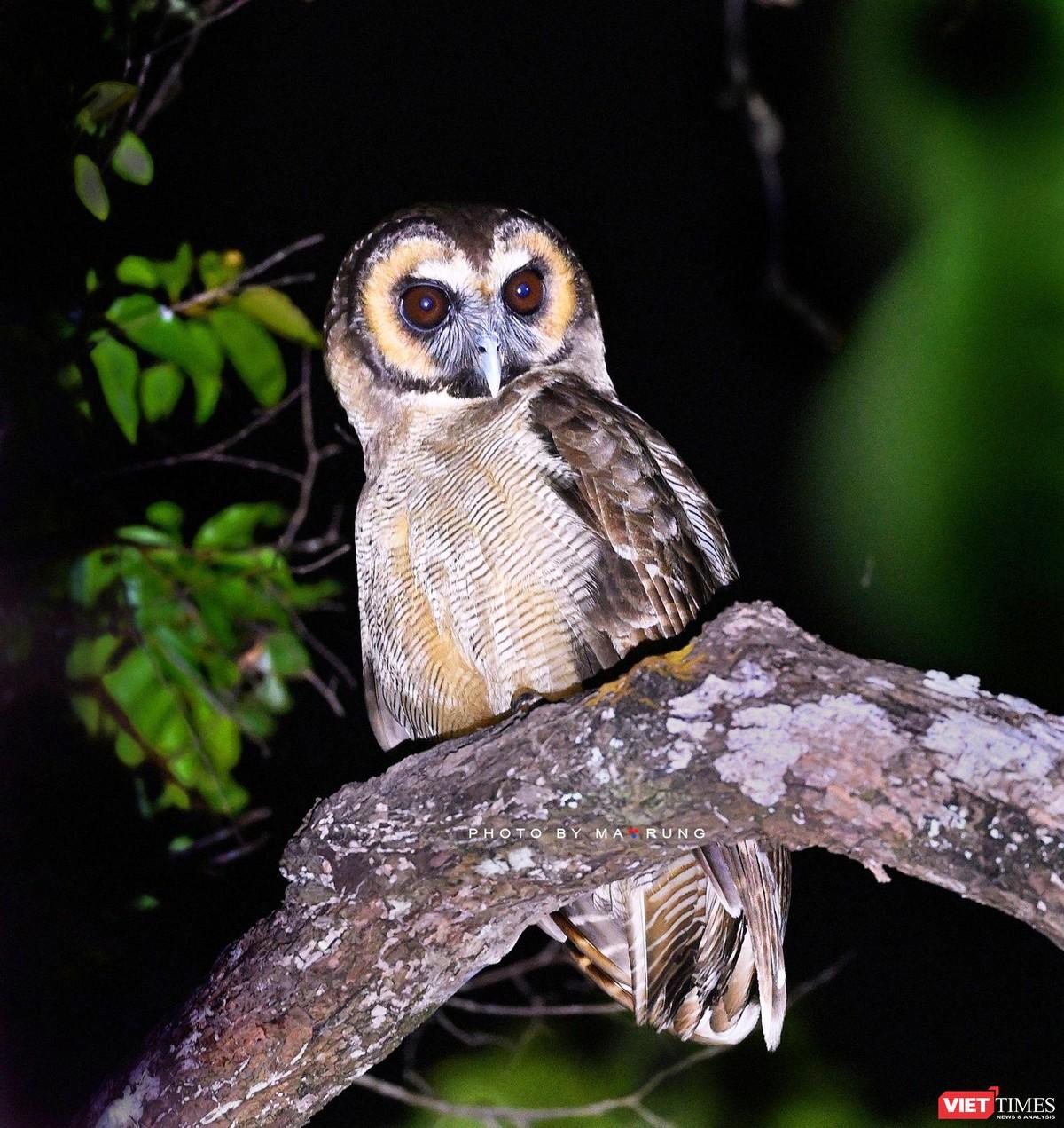 Săn ảnh chim với Ma Rừng và Phù Thủy ảnh 17