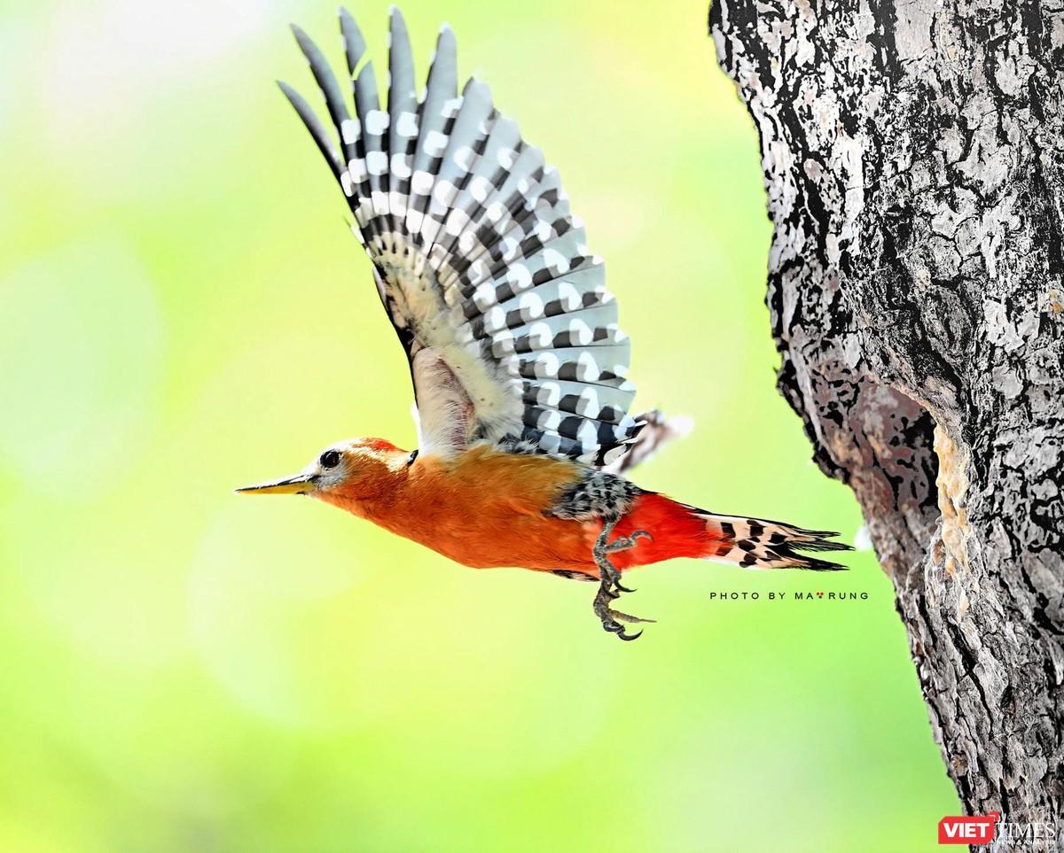 Săn ảnh chim với Ma Rừng và Phù Thủy ảnh 7