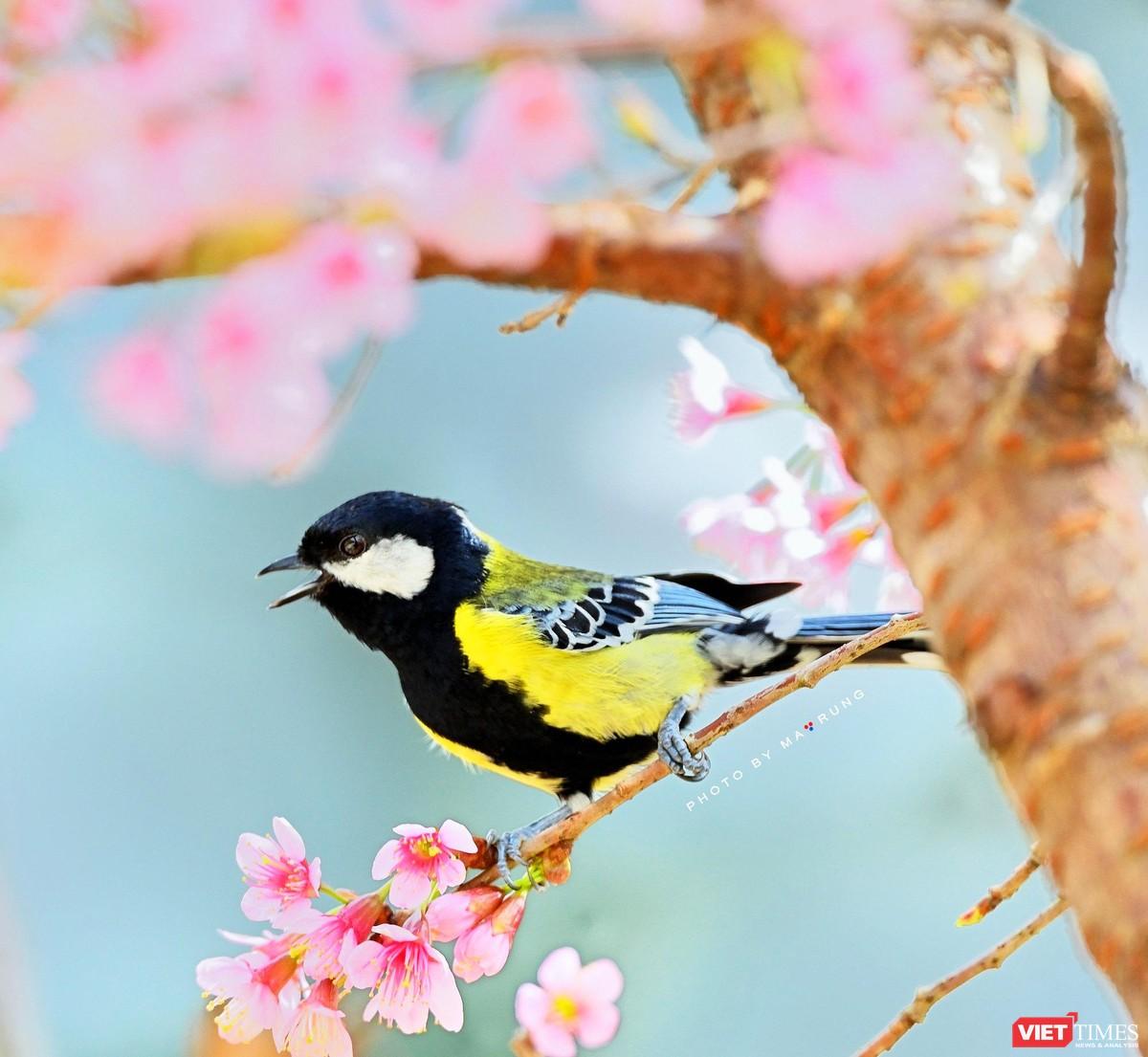 Săn ảnh chim với Ma Rừng và Phù Thủy ảnh 4