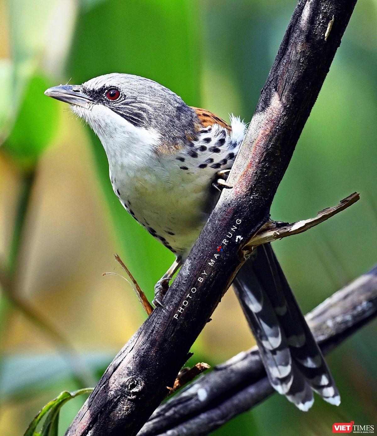 Săn ảnh chim với Ma Rừng và Phù Thủy ảnh 6