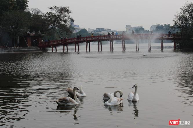 Người dân Thủ đô thích thú ngắm đàn thiên nga 12 con được thả nuôi ở Hồ Gươm ảnh 2