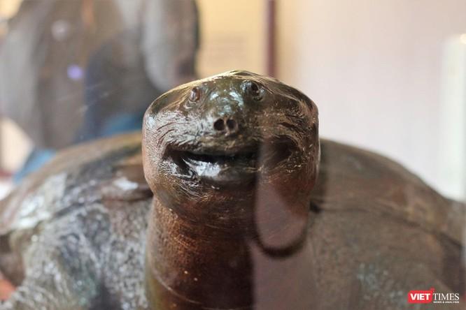 """Khách du lịch nhận xét gì về tiêu bản """"cụ Rùa"""" cuối cùng tại Hồ Gươm? ảnh 4"""