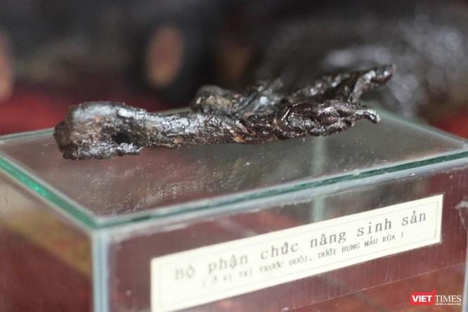 """Khách du lịch nhận xét gì về tiêu bản """"cụ Rùa"""" cuối cùng tại Hồ Gươm? ảnh 8"""