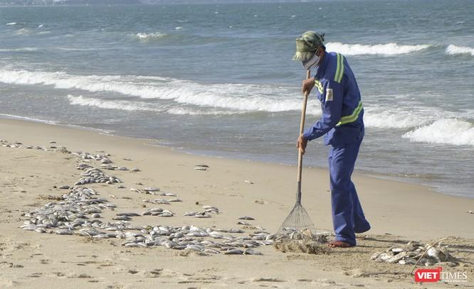 Đà Nẵng: Vẫn chưa rõ nguyên nhân cá chết hàng loạt, dạt vào bờ biển ảnh 9