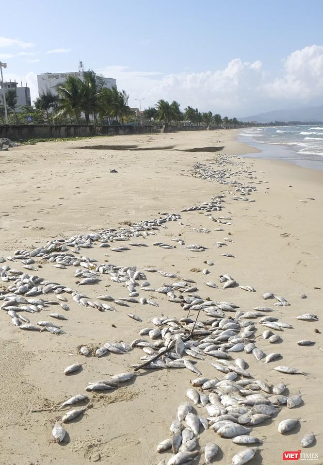Đà Nẵng: Vẫn chưa rõ nguyên nhân cá chết hàng loạt, dạt vào bờ biển ảnh 1