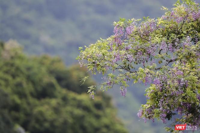 """Ảnh: Vẻ đẹp """"lặng người"""" của Sơn Trà vào những mùa hoa ảnh 23"""