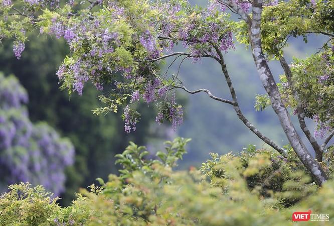 """Ảnh: Vẻ đẹp """"lặng người"""" của Sơn Trà vào những mùa hoa ảnh 24"""