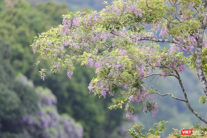 """Ảnh: Vẻ đẹp """"lặng người"""" của Sơn Trà vào những mùa hoa ảnh 16"""