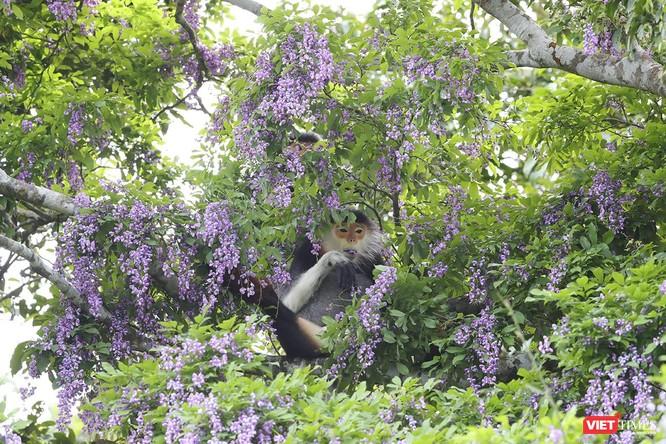 """Ảnh: Vẻ đẹp """"lặng người"""" của Sơn Trà vào những mùa hoa ảnh 27"""