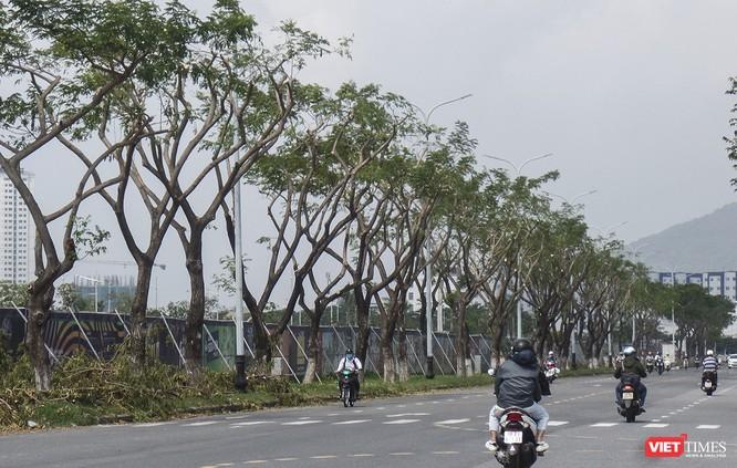 """Đà Nẵng: Tỉa """"trụi"""" cây xanh để… chống bão và ra tán đẹp hơn! ảnh 2"""