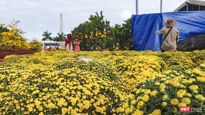 Ảnh: Rộn ràng chợ hoa xuân Đà Nẵng ảnh 13
