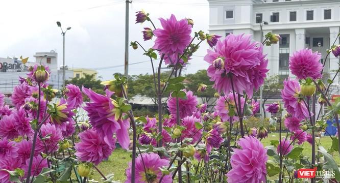 Ảnh: Rộn ràng chợ hoa xuân Đà Nẵng ảnh 17